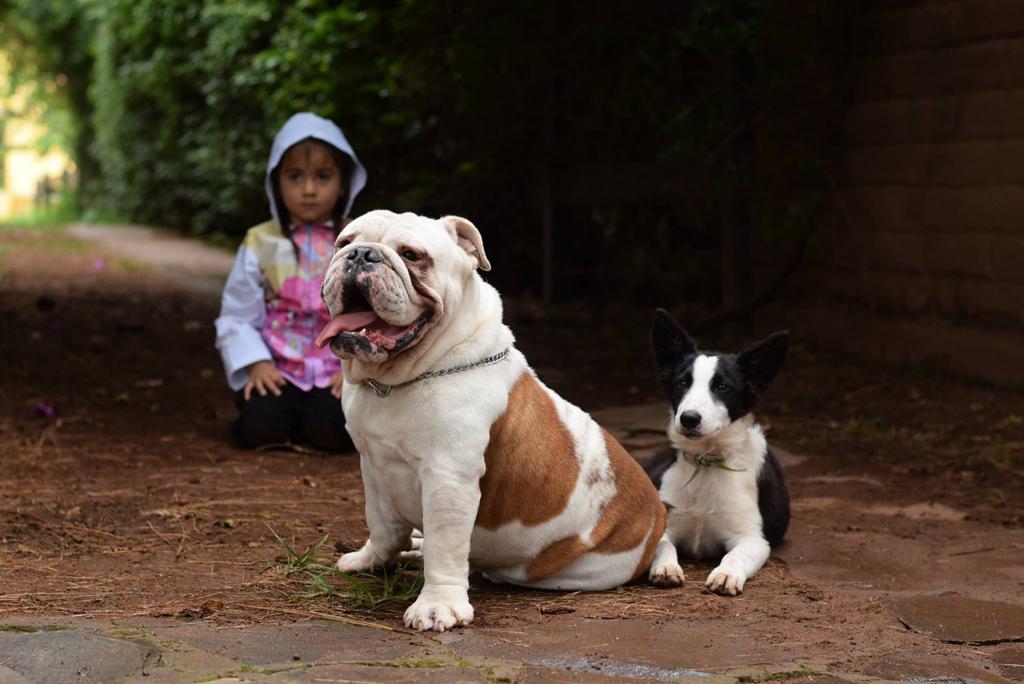 girl-dogs