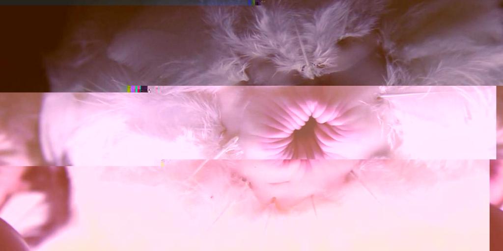 2013-pinar-yoldas-fools-fowl-glitched-2-7-2017-11-06-57